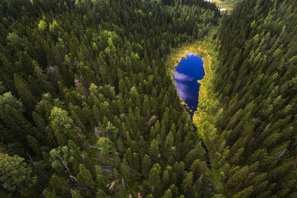 Sininen metsälampi ylhäältä kuvattuna havumetsän keskellä.