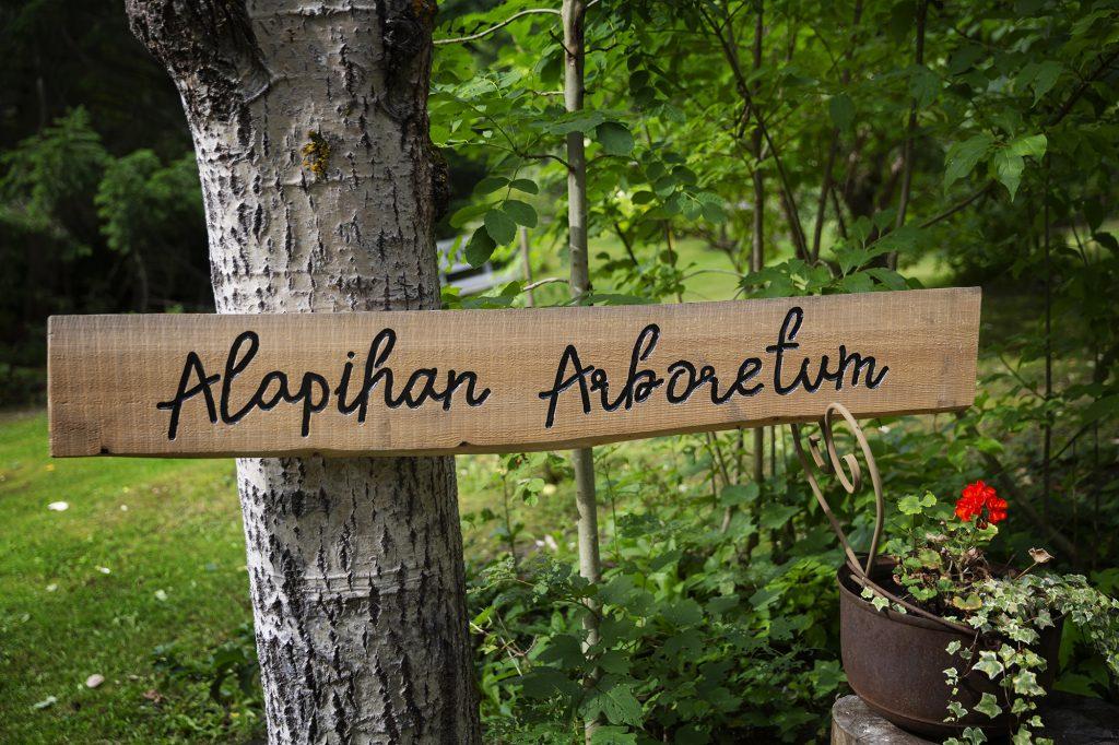 Alapihan Arboretumin kyltti.