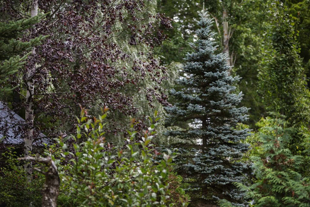 Alapihan Arboretum, erilaisia puulaleja.