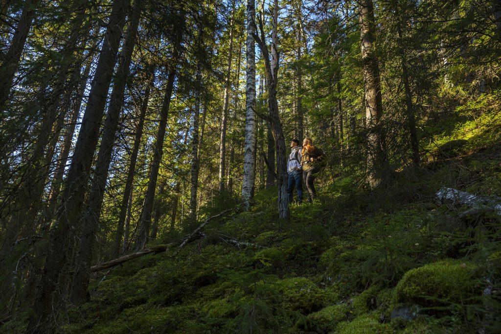 Nuori mies ja nainen katsovat metsämaisemaa ylhäällä rinteessä.