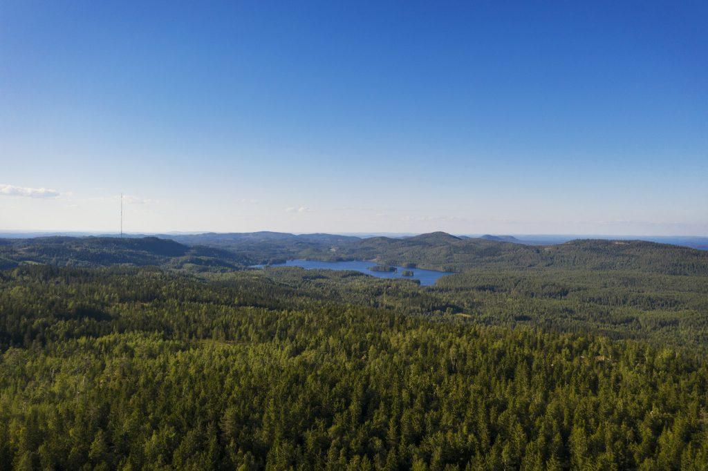 Vaaramaisema Ryläyksen näkötornista Kolille päin kesällä.